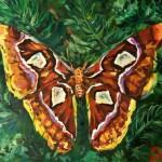 Нейман Оксана  14 лет Самая большая бабочка в мире